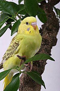 Выставка декоративных и певчих птиц в Иркутске