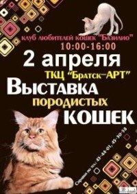 Выставка породистых кошек в Братске
