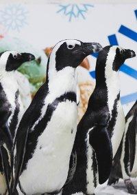 Цирковое пингвин-шоу «Ласта-Рика»