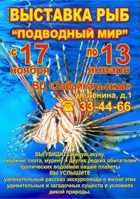 Выставка рыб «Подводный мир» в Чите
