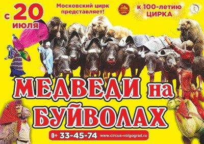 Цирковое шоу «Медведи на буйволах»