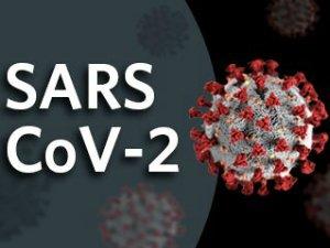 В России появилась новая тест-система на коронавирус