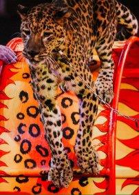 Цирковое шоу «Аливрувер» Астраханский государственный цирк (Астрахань), Астрахань