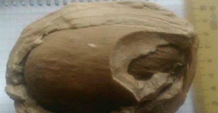Житель Армавира предлагал коллекционерам приобрести окаменелое яйцо динозавра