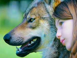 Смотреть Мой волк