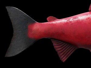 Нерка. Рыба красная